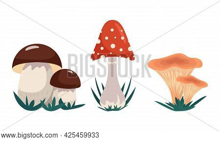 Variety Of Mushrooms, Set Of Mushrooms - Alien And Edible, Vector Clip Art In Flat Style. Isolated