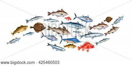 Sea Fish Realistic Concept With Different Species Symbols Vector Illustration