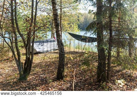 Empty Comfortable Fabric Hammocks Hang On Trees Trunks On Hilly Riverbank Covered With Dry Leaves In