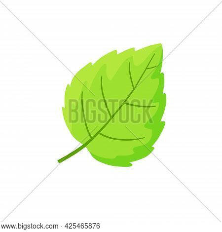 Mint Leaf. Cool Spice. Refreshment And Freshness. Green Part Of The Plant. Flat Cartoon Illustration