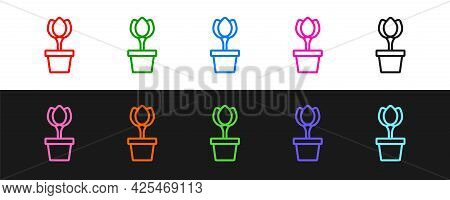 Set Line Flower Tulip In Pot Icon Isolated On Black And White Background. Plant Growing In A Pot. Po