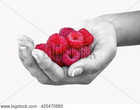 Close Up Of Ripe Raspberries In Girl's Hand In Selective Color Effect Isolated On White