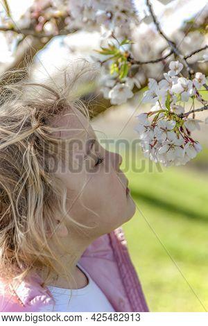 Sakura Blossoms. The Girl Enjoys The Scent Of Japanese Cherry Blossoms. Sakura Blossom In Japan In S