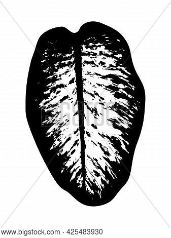 Vector Dieffenbachia (dumb Cane) Leaf Silhouette Isolated On White Background