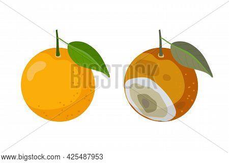Fresh Orange Fruit And Bad Rotten Orange Isolated On White. Citrus Fruit Becomes Spoiled. Concept Of