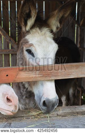 Donkey In Stable Shed Countryside Farm Animal Jackass Livestock