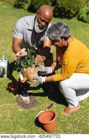 Senior african american couple spending time in sunny garden together planting flowers. retreat, retirement and happy senior lifestyle concept.