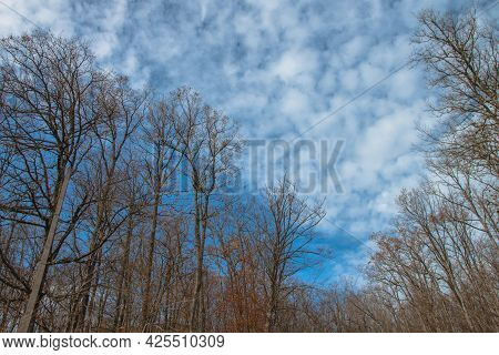 The Branches Of The Leafless Trees Stretch Towards The Blue Cloudy Sky. Late Autumn