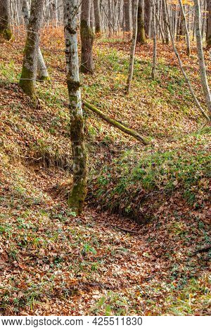 A Small Ravine Strewn With Yellow Leaves In The Forest. Autumn Landscape