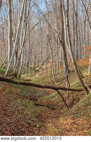 In The Foreground, A Dry Fallen Tree Spanned A Ravine. Beyond It Are Leafless Trees. The Ground Is C