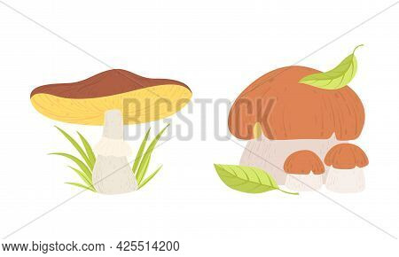 Different Types Of Wild Forest Edible Mushrooms Set Cartoon Vector Illustration