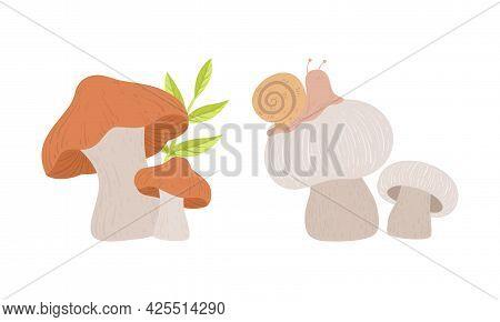Wild Fresh Forest Edible Mushrooms Set Cartoon Vector Illustration
