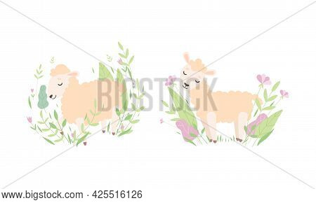 Cute Funny Little Lamb In Flowers Set, Lovely Baby Sheep Farm Animal In Pastel Colors Cartoon Vector