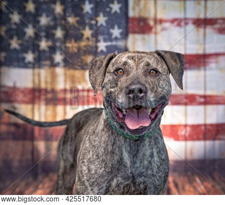 studio shot of a cute dog in front of the American flag