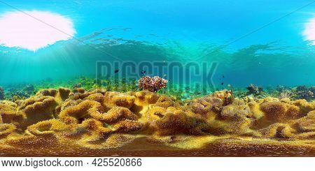 Colorful Tropical Coral Reef. Hard And Soft Corals, Underwater Landscape. Travel Vacation Concept. P