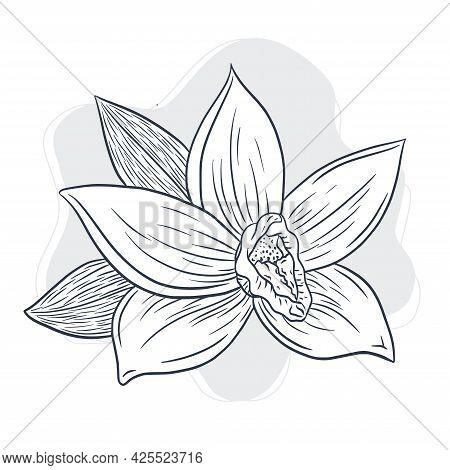 Hand Drawn Vanilla Flower Illustration. Line Drawing Vanilla Blossom Vector Art In Vintage Style For