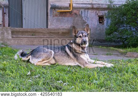 Young Mixed Breed Dog On The Street