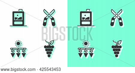 Set Bunch Of Grapes, Cardboard Box Wine, Drying And Gardening Scissors Icon. Vector