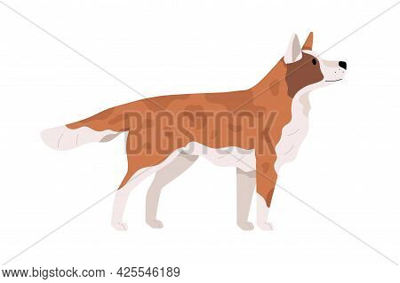 Beautiful Dog Standing And Looking Up. Side View Of Doggy. Canine Animal With Spots. Puppy S Profile