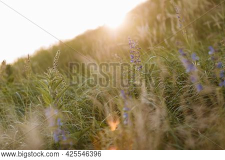 Selective Soft Focus Of Dry Grass, Violet Blue Vibrant Wildflowers, Stalks Blowing In The Wind At Go