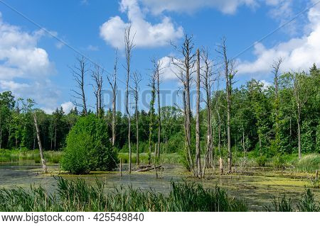 Pristine Moorland Landscape With Swampy Water And Forest