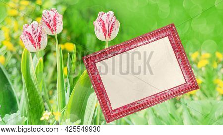 Tulip Flowers With A Green Unfocused Background. Frame With Blank Paper For Text
