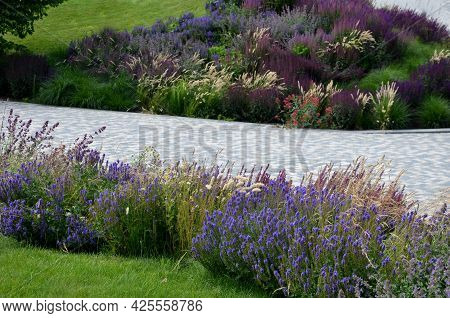Flowerbed With Tall Perennial Plant Of White Flowers And Undergrowth Of Yellow Perennials And Sage I