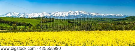 Hosman, Sibiu - Snowy Fagaras Ridge, Carpathian Mountains Spring Landscape With Rapeseed Yellow Fiel