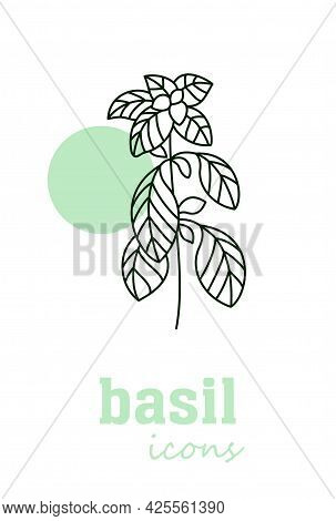 Basil Vector Icon. Vegetable Green Leaves. Greenery. Culinary Herb Spice For Cooking, Medical, Garde