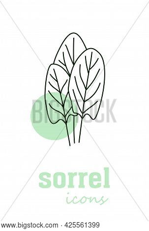 Sorrel Calories Vector Icon. Vegetable Green Leaves. Greenery. Culinary Herb Spice For Cooking, Medi