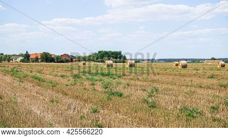Beveled Wheat Field, Hay Harvesting In The Rural Area