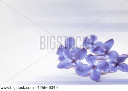 Lilac Flowers On A Light Background. A Bunch Of Lilac Flowers. A Blooming Branch Of Lilacs.