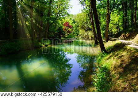 Sunrays Coming Through The Trees In The Enchanted Forest With River And Ducks.