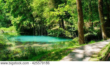 Path In The Enchanted Forest With River And Lush Vegetation