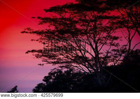 A Beautiful Red Sunset And Tree Silhouette Atop Bukit Bendera, Penang Hill Malaysia.