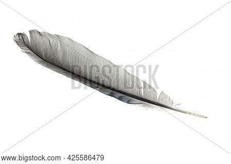 Gray Feather On A White Isolated Background