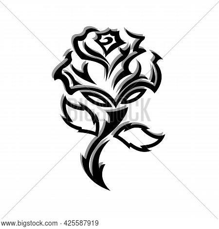 Beautiful Rose Flower In Garden. Rose Flower Background. Lovely Rose. Roses In Tropical Garden. Colo
