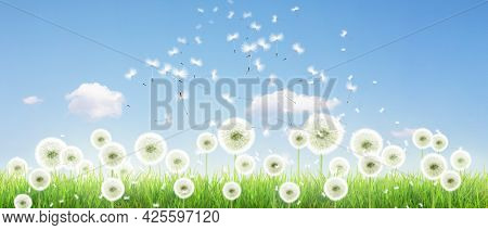 Beautiful Sommer Flowers In The Wind On Blue Sky