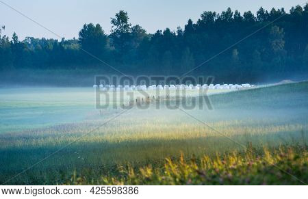 A Misty Morning Landscape Of A Field With Trees In Distance. Summertime Scenery Of Northern Europe.
