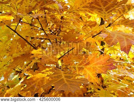 Fabulous Autumn Background Of Golden Foliage. The Texture Of Nature, The Forest. Branches And Foliag