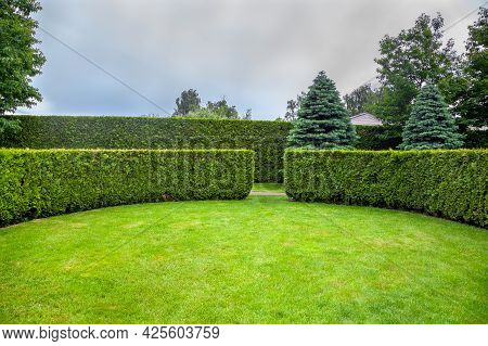 Curved Thuja Hedge In A Garden With Trees And Fir Trees And A Green Lawn Spring Backyard Landscape,