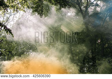 Fire In The Forest. Environmental Disaster And The Threat Of Full-scale Fires. Smoke Is Blown Up And