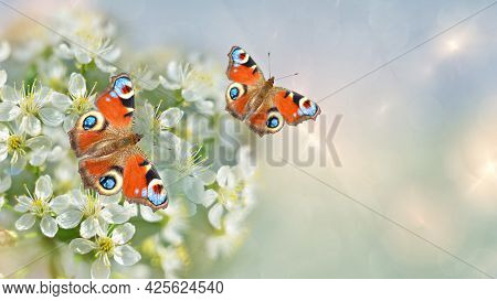 Unfocused Background With Fractal Highlights, Blooming Fruit Trees And Butterflies