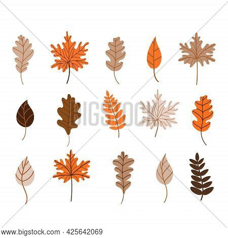 Autumn Fallen Leaves Set. Maple, Oak, And Birch Leaves Isolated On A White Background. Vector Illust
