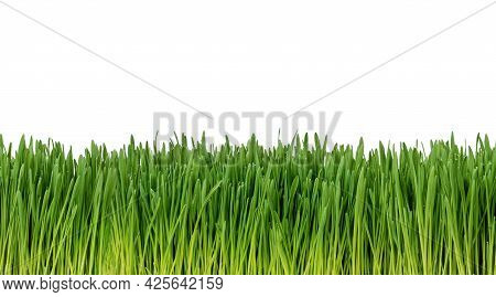 Easy To Extend, Seamless, Fresh Grass Isolated On White Background