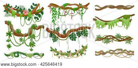 Jungle Lianas. Rainforest Green Vine Hanging On Branch. Cartoon Tropical Leaves, Liana, Moss And Flo
