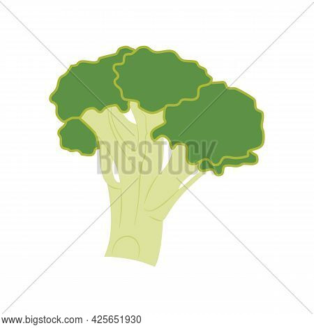 Broccoli Vegetable. Healthy Food, Vegetarianism, Agriculture. Natural Ingredient For A Dish, A Sourc