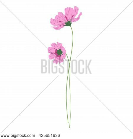 Two Pink Cosmos Flowers With Long Stems, Summer Bouquet Of Flowers. Hand-drawn Vector, Flat Style. B
