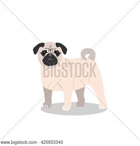 A Small Beige Dog Of The Pug Breed, Isolated On A White Background. Favorite Pets