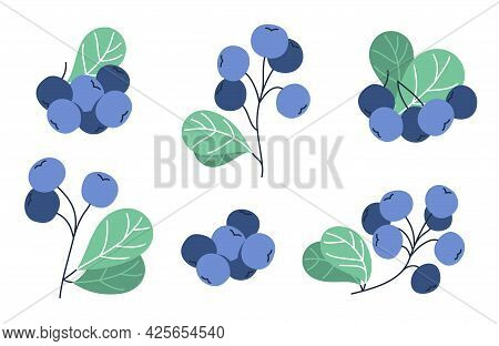 Fresh Delicious Ripe Wild Blueberry Vector Flat Illustration Isolated On White, Natural Diet Food Ve